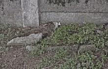 Izraelita temetők: Szamosbecs