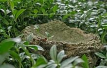 Izraelita temetők: Szákszend