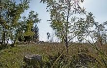 Izraelita temetők: Ecseg