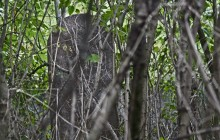 Izraelita temetők: Göd