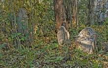 Herend izraelita temető