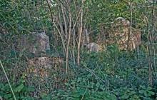 Izraelita temetők: Somlóvásárhely
