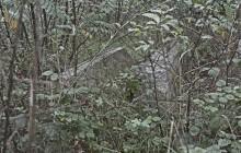 Izraelita temetők: Bekecs