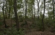 Bodroghalom izraelita temető