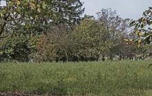 Izraelita temetők: Bodrogkisfalud