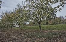 Bodrogkisfalud izraelita temető