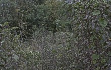 Izraelita temetők: Bódvalenke