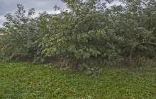 Borsodgeszt izraelita temető