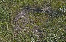 Ziliz izraelita temető