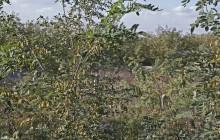 Zemplénagárd 1 izraelita temető