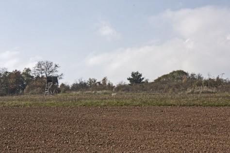 Izraelita temetők: Viszló