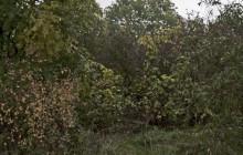 Vámosújfalu izraelita temető
