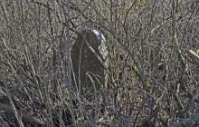 Dédestapolcsány izraelita temető