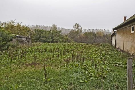 Tiszabábolna izraelita temető