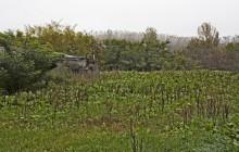 Izraelita temetők: Tiszabábolna