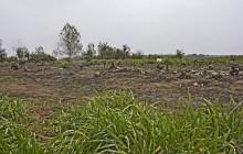 Taktakenéz izraelita temető