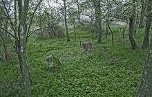 Izraelita temetők: Egerlövő