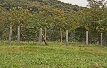 Izraelita temetők: Szomolya