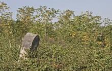 Felsőregmec zsidótemető