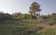 Szakácsi izraelita temető