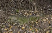 Izraelita temetők: Selyeb