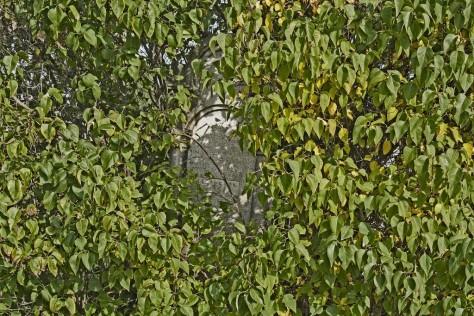 Sajószöged izraelita temető