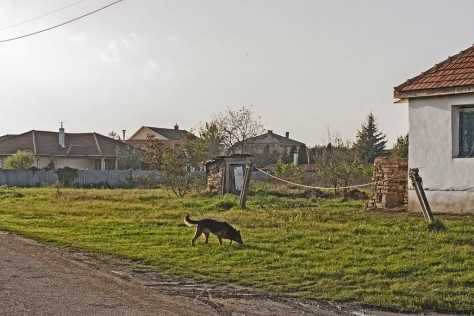 Izraelita temetők: Sajópetri
