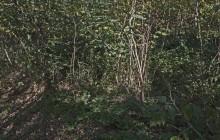 Izraelita temetők: Révlányvár