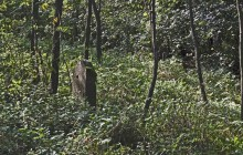 Nyomár izraelita temető