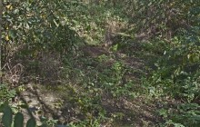 Izraelita temetők: Jármi