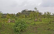 Nemesbikk 2 izraelita temető