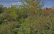 Izraelita temetők: Nagycsécs