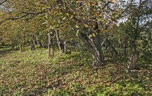 Mikóháza izraelita temető