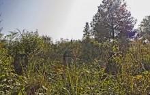 Izraelita temetők: Kovácsvágás